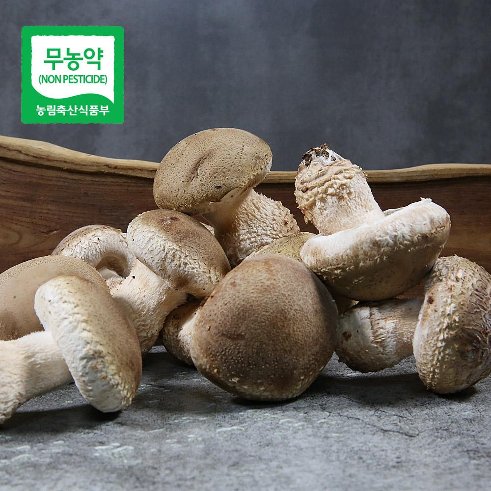 무농약 송화고버섯 1kg_상품/미송화