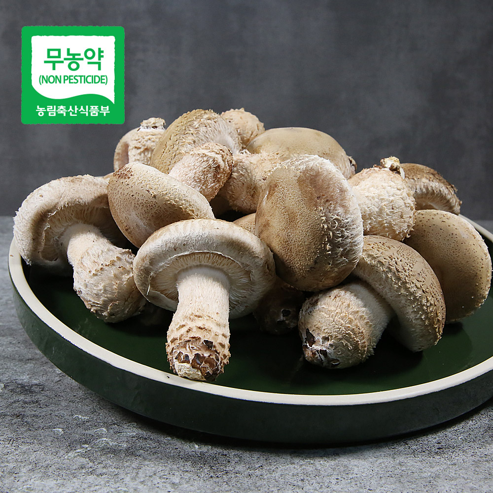 무농약 송화고버섯 500g_중품/미송화