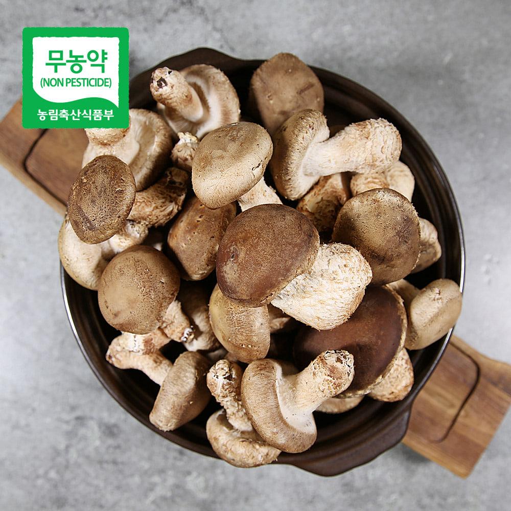 무농약 송화고버섯 1kg_가정용/미송화