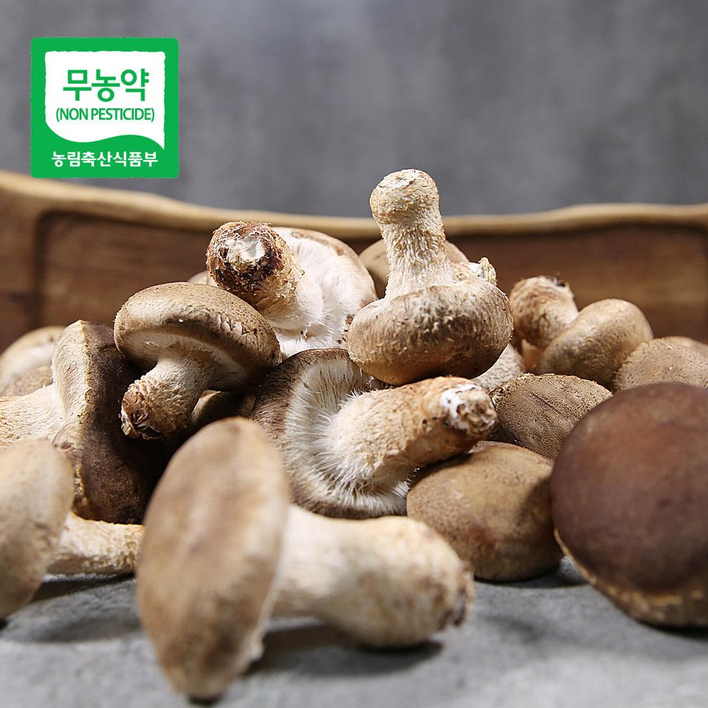 무농약 송화고버섯 500g_가정용/미송화